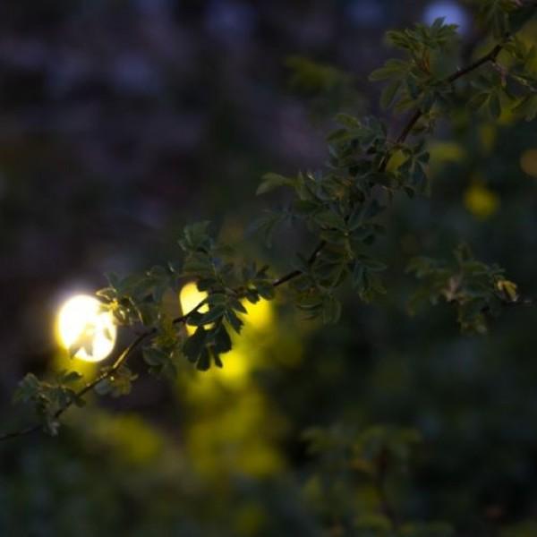 Waarom jij juist in de herfst tuinverlichting nodig hebt